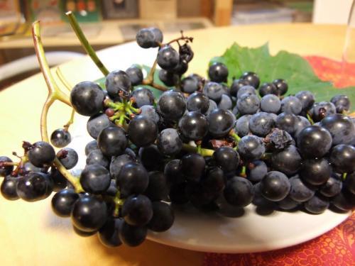 2011 0916 Weinprobe 0008
